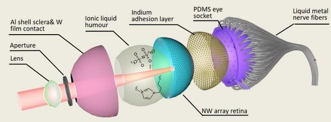 Structure de l'oeil électrochimique (EC-Eye) développé au HKUST
