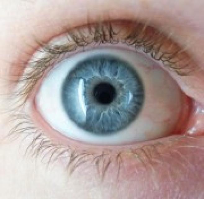 Les individus aux yeux bleus auraient un seul et unique ancêtre