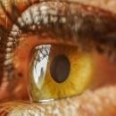 DMLA: une découverte décisive pour retrouver la vue?