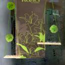 Morel: Koali fête le printemps avec de nouvelles créations aux inspirations florales