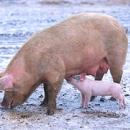 Un adolescent recouvre la vue grâce à une cornée de porc