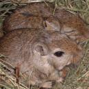 Des souris aveugles recouvrent la vue