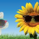 Swatch se lance dans les lunettes de soleil avec Safilo