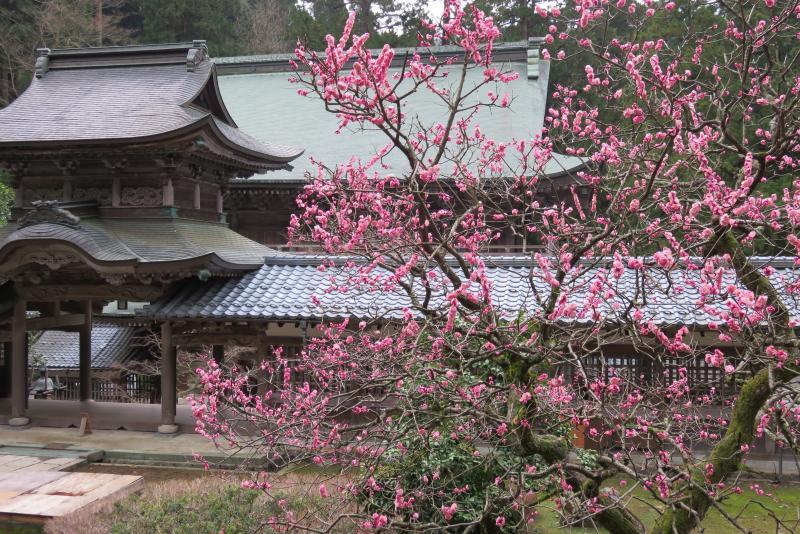 Sur la route pour la ville de Fukui, temple Eiheiji, l'un des deux principaux temples japonais de l'école Sōtō - bouddhisme zen